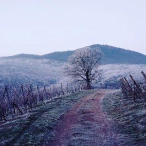 Reichsfeld Alsace vigne domaine bores hiver